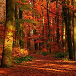 Play Autumn Jigsaw