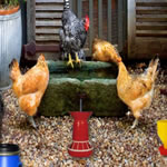 Play Poultry Farm Easter Escape
